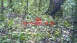 Subject ACP000djrp