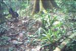 Subject ACP00080v3