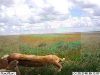 Snapshot Serengeti — Zooniverse